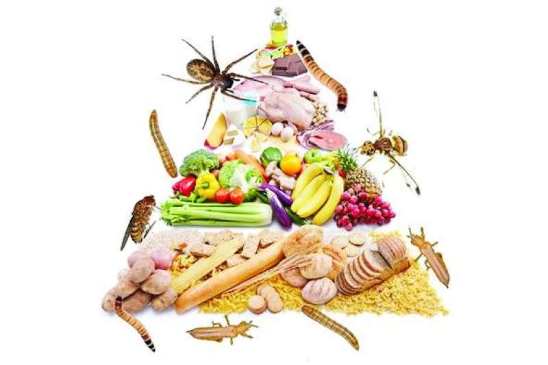 الحشرات تشق طريقها إلى الأجسام عبر الغذاء
